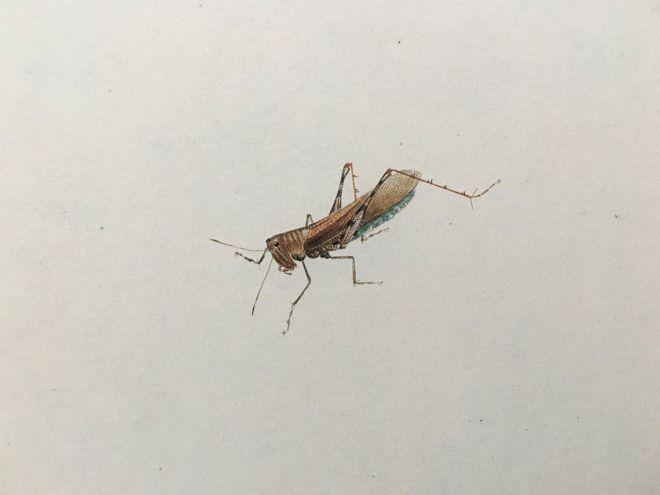 3 owad