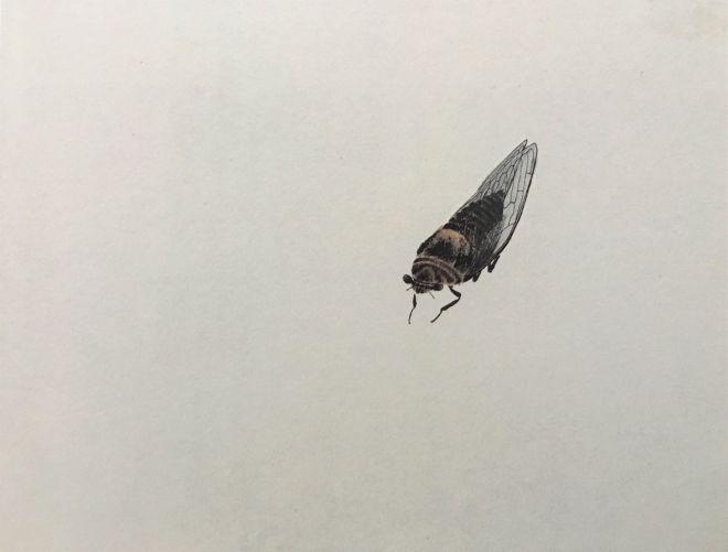 4 owad2